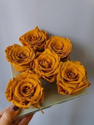 Роза горчичная 6,5-7см стабилизированная DIJON