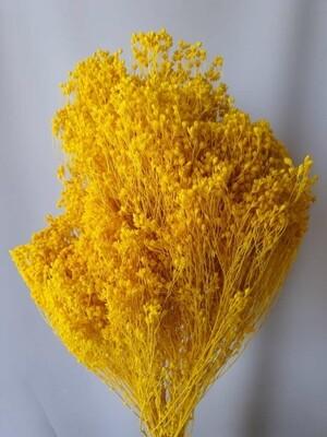 Брум желтый сухой