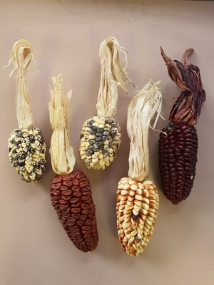 Кукуруза декоративная цветная микс