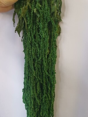 Амарант зелёный стабилизированный