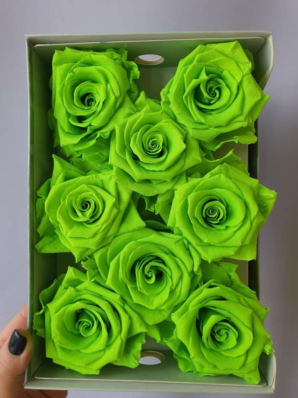 Роза зеленая 6,5-7см стабилизированная green mela