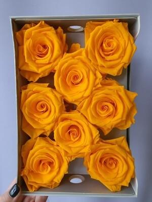Роза оранжевая 6,5-7см стабилизированная orange clair
