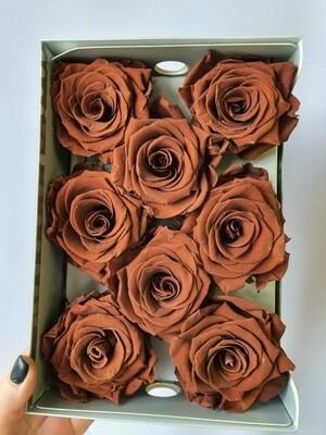 Роза коричневая 6,5-7см стабилизированная chocolate
