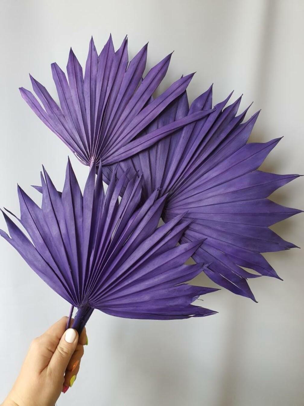 Листья пальмы сухие веером фиолетовые 3 шт