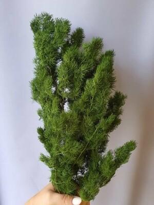Аспарагус натуральный зелёный стабилизированный