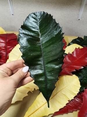 Листья стабилизированные зеленые