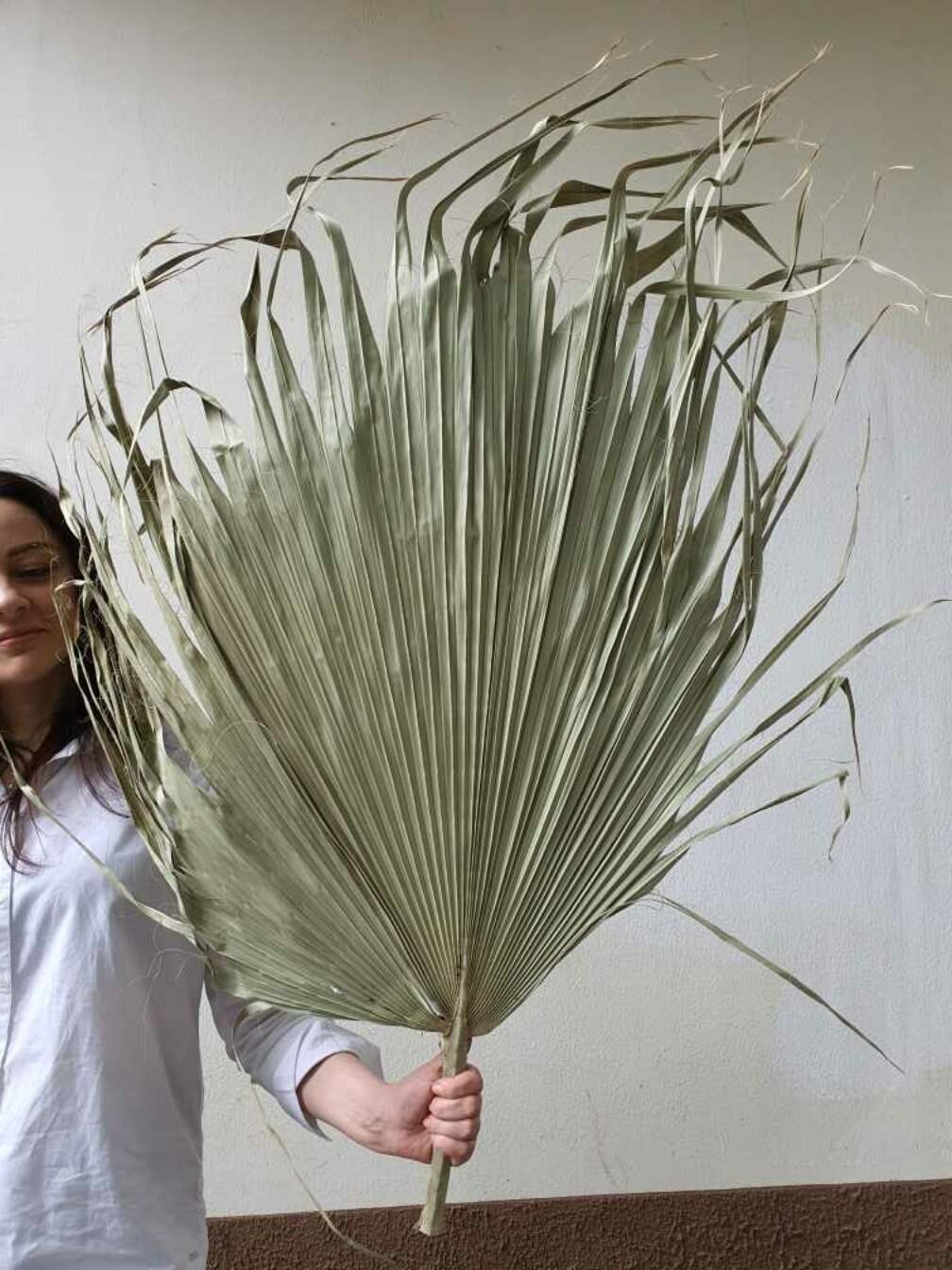 Листья пальмы гигант натуральные