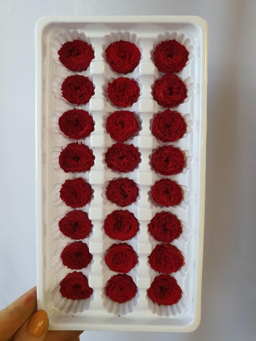 Роза красная 2см пионовидная стабилизированная