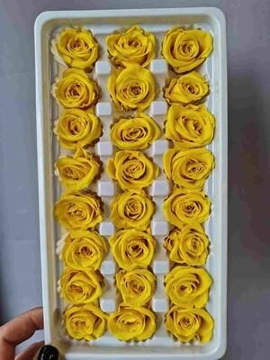Роза жёлтая 3см стабилизированная Китай