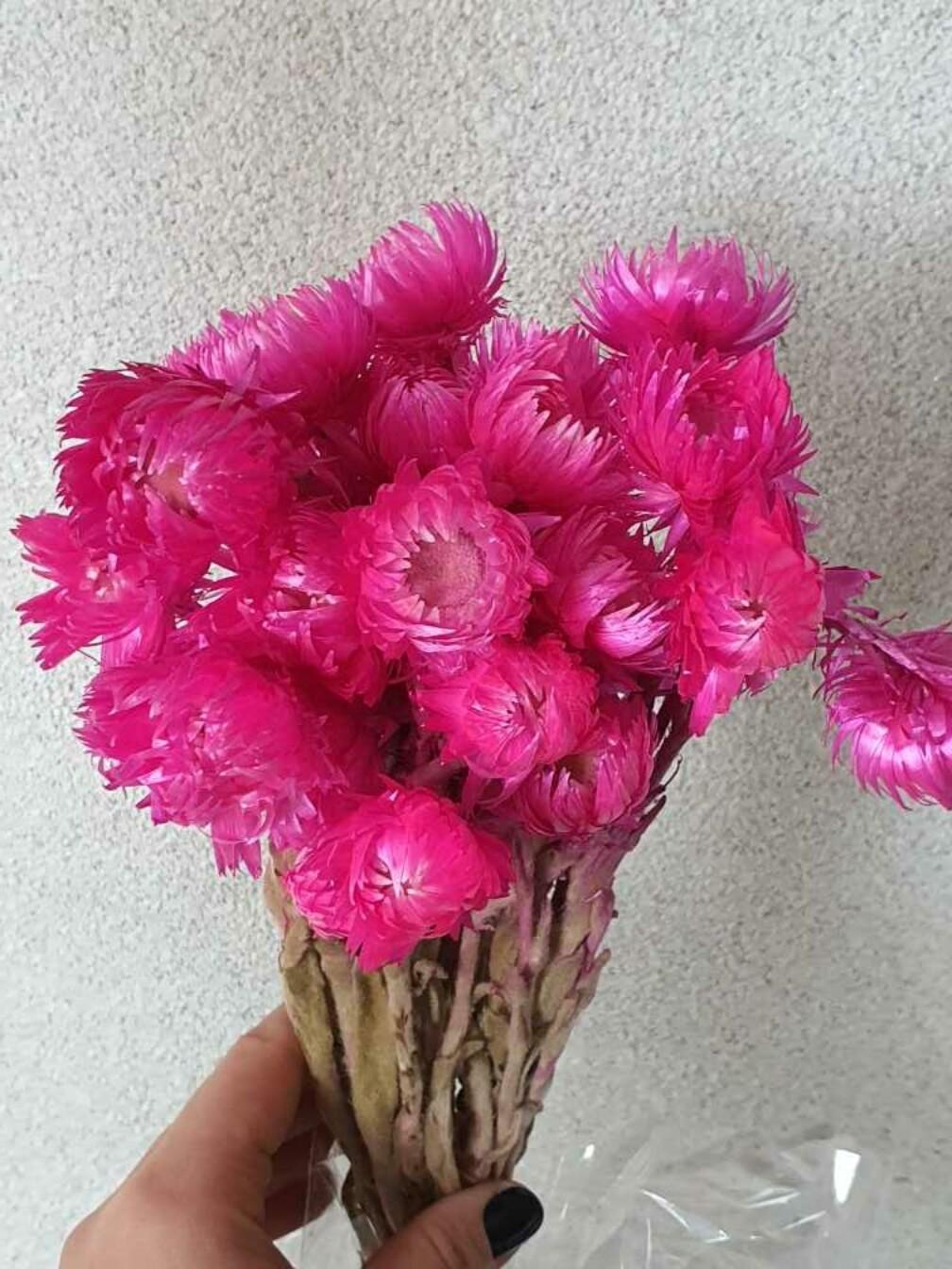 Гелихризум розовый яркий италикум