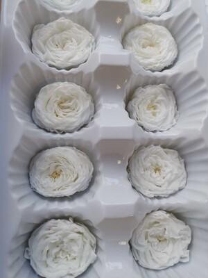 Роза белая 2,5-3см пионовидная стабилизированная