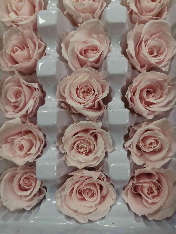 Роза розовая светлая 2-3см стабилизированная