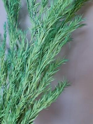 Чайное дерево тиффани стабилизированное