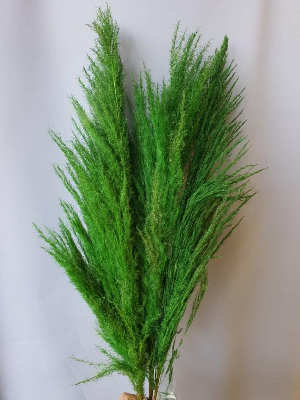 Кортадерия зелёная 3 шт пучок