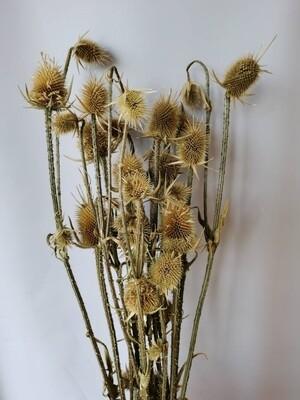 Ворсянка натуральная сухоцвет