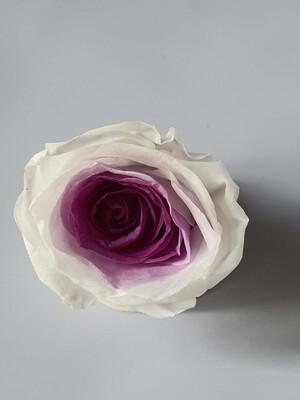 Роза белая с фиолетовой серединой 3см стабилизированная