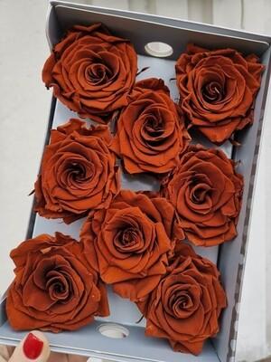 Роза коричневая стабилизированная 6,5-7см amaretto