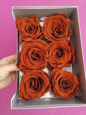 Роза коричневая 7-8 см стабилизированная amaretto