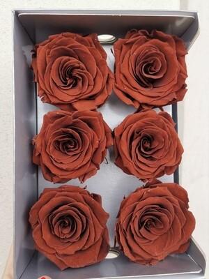 Роза коричневая стабилизированная 7-8см chocolate