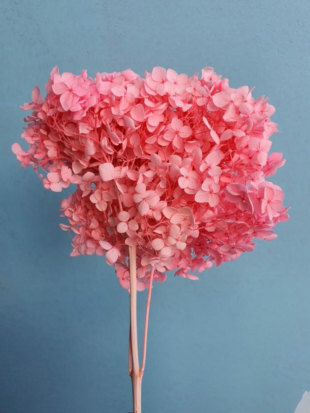 Гортензия розовая фуксия стабилизированная
