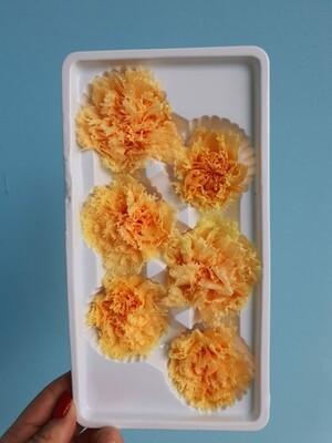 Гвоздика оранжевая 5-6см стабилизированная