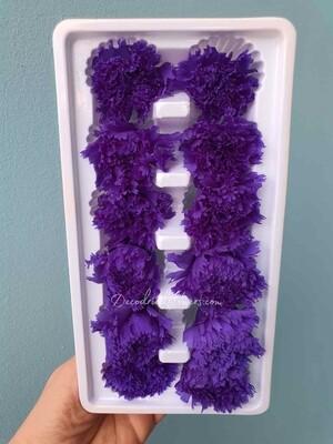 Гвоздика фиолетовая 3,5-4см стабилизированная