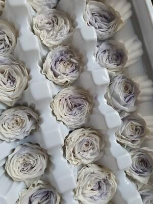 Роза белая с голубым 2,5см пионовидная стабилизированная