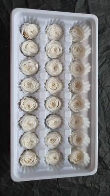 Роза белая 2-2,5см пионовидная стабилизированная