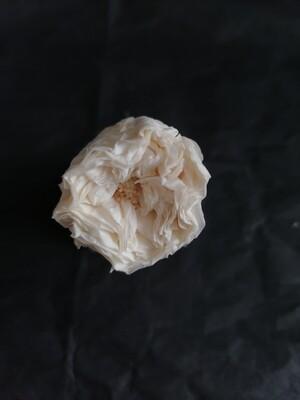 Роза бежевая 2,5-3см пионовидная