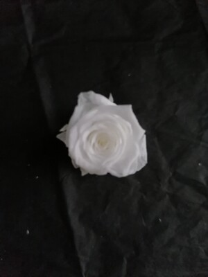 Роза белая 2-2,5см стабилизированная