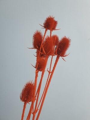 Ворсянка оранжевая
