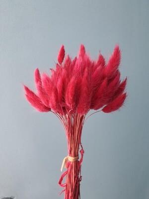 Лагурус малиновый