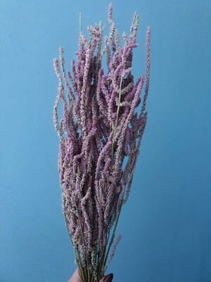 Dried flowers, a lilac plant similar to amaranth