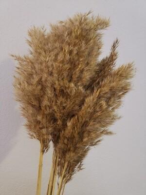 Тростник натуральный сухоцвет