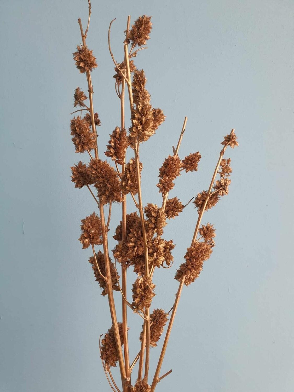 Сухоцвет (шишки, колючки) золото