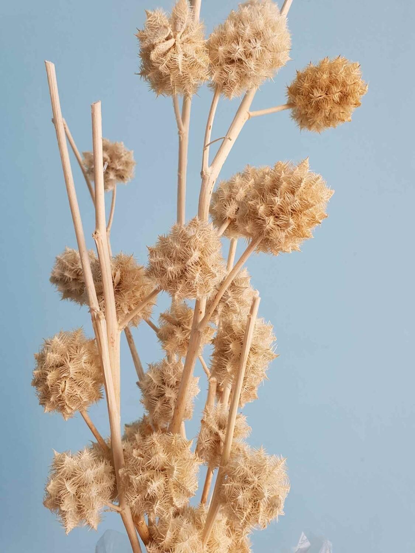Сухоцвет (шишки, колючки) выбеленный