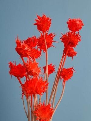 Расторопша ярко оранжевая флуорисцентная