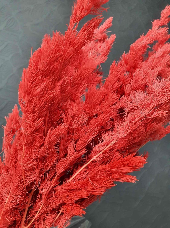 Аспарагус красный стабилизированный