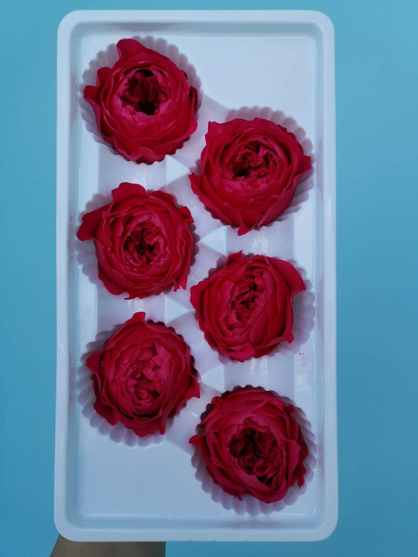 Роза малиновая 5см пионовидная стабилизированная