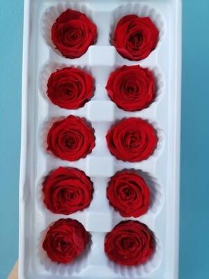 Роза красная 3-4см стабилизированная распродажа