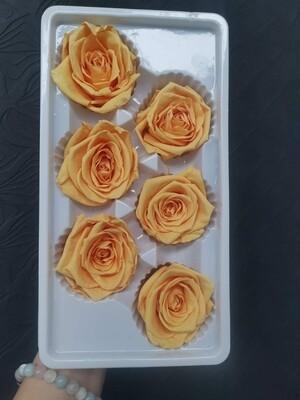 Роза жёлтый персик 4-5см стабилизированная