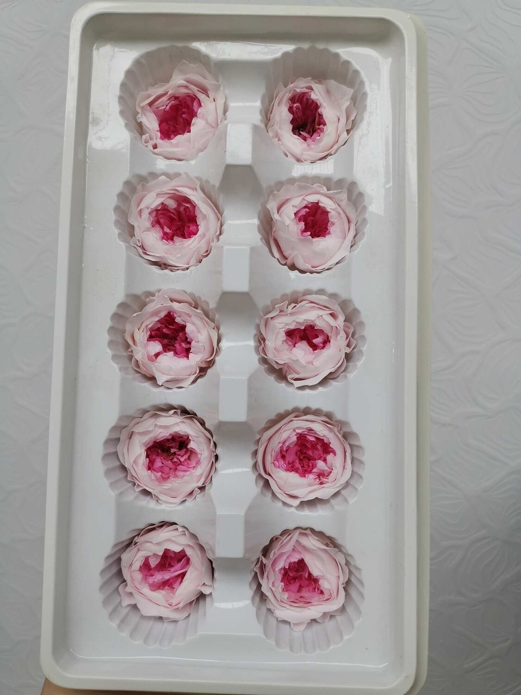 Роза розовая с ярко розовой серединой 3см пионовидная стабилизированная