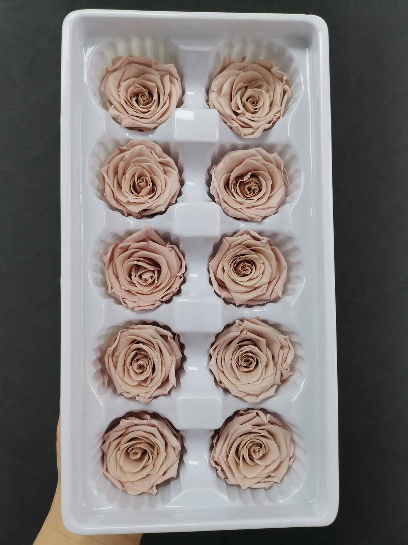 Роза мокко 3-4см стабилизированная