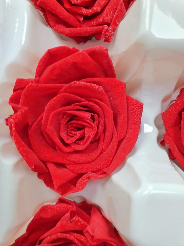 Роза красная 4см стабилизированная