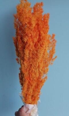 Аспарагус оранжевый стабилизированный Китай