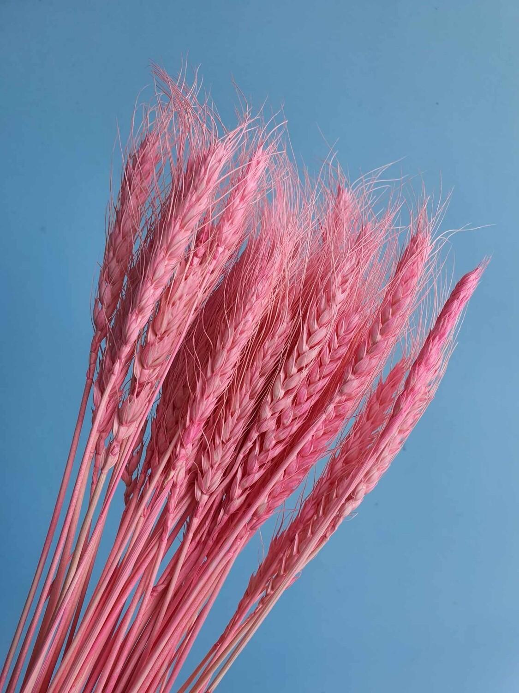 Хордеум розовый сухоцвет