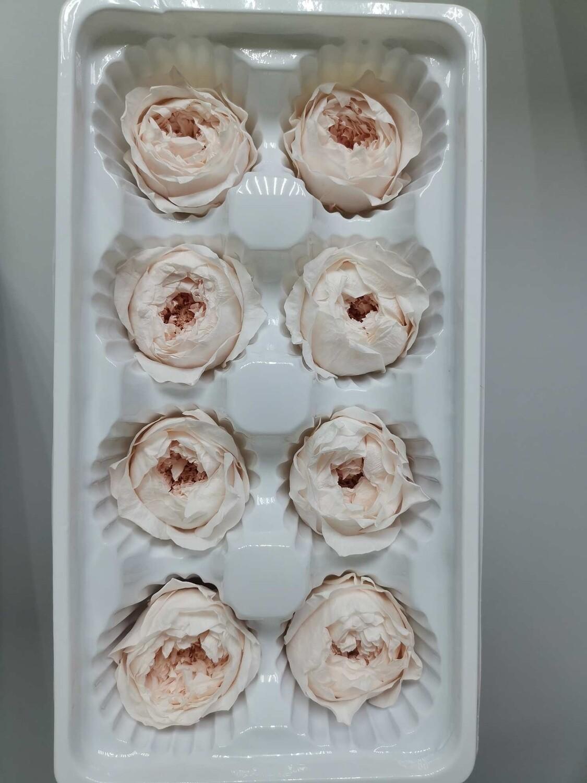 Роза розовая светлая 4см пионовидная стабилизированная