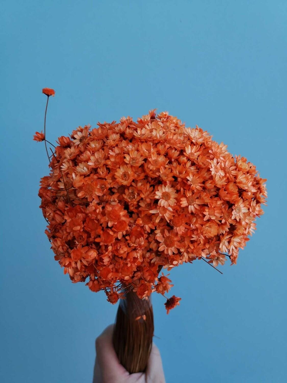 Гликсия оранжевая большой пучок