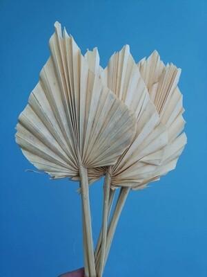 Листья пальмы сухие белые 10 шт
