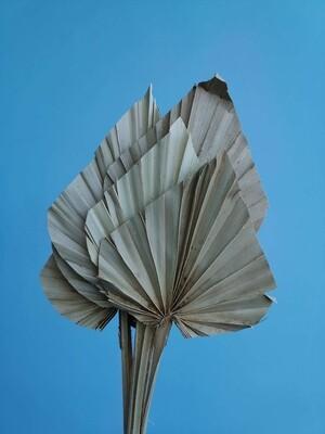 Листья пальмы сухие натуральные 10 шт